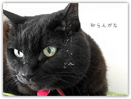 DropShadow ~ ためころ4.jpg